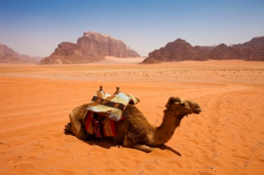 The camels habitat is the desert.