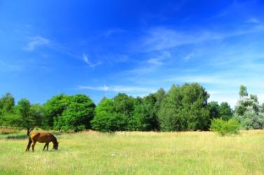A horse grazes in a lea.