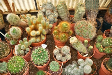Cactus plants of many different varieties.