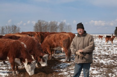 A cattleman tending to his herd.