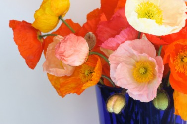 A vase of Iceland poppies.