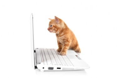 A little kitty plays with a computer.