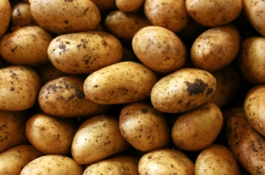 A pile of potatoes.