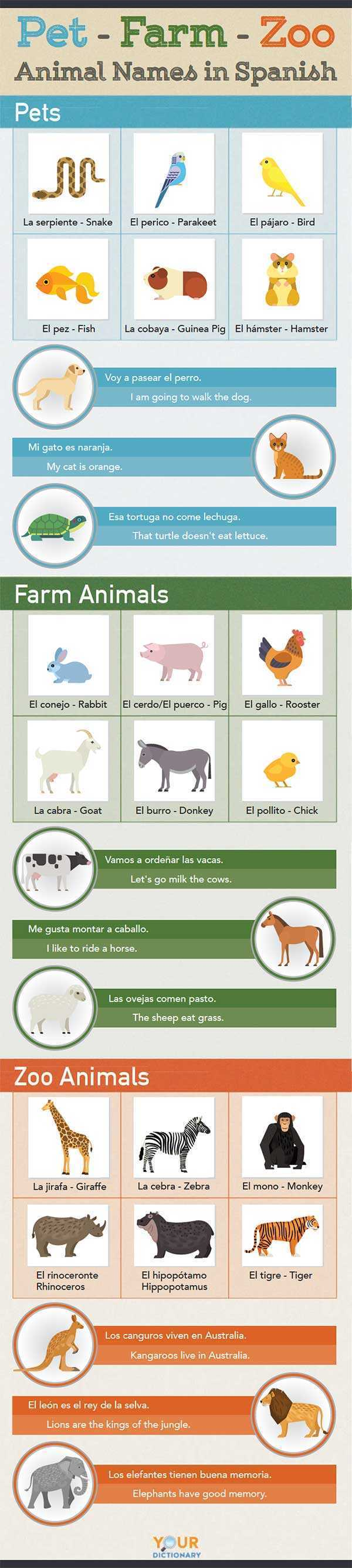 Animal Names in Spanish