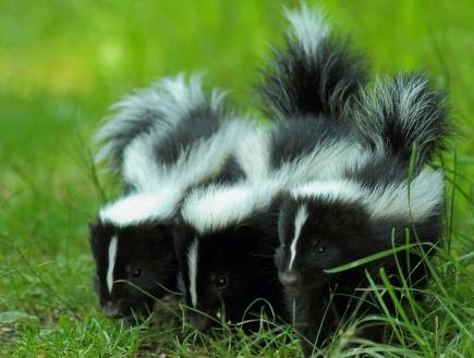 Funny Animal Puns Yourdictionary Slideshow
