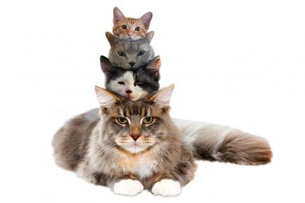 Cat Puns | YourDictionary Slideshow