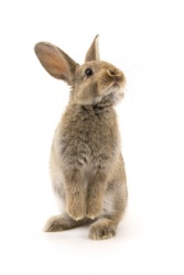 Warm-blooded animals, like this rabbit, are endothermic animals.