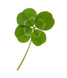A single four-leaf clover.